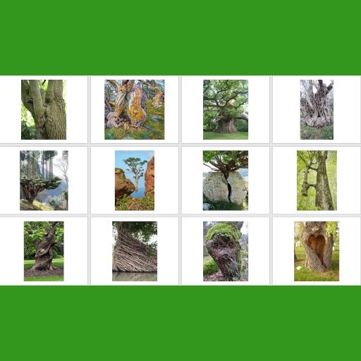 Trees as metaphors